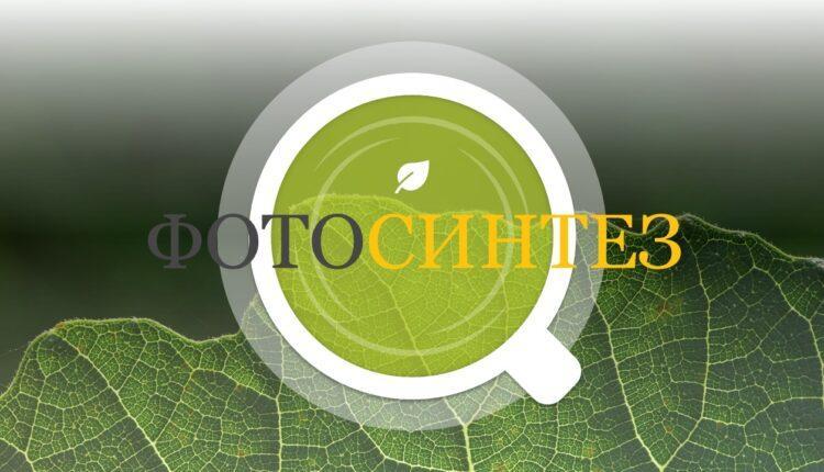 фотосинтез презентация