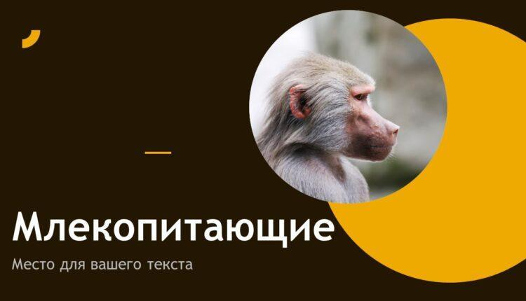 млекопитающие презентация